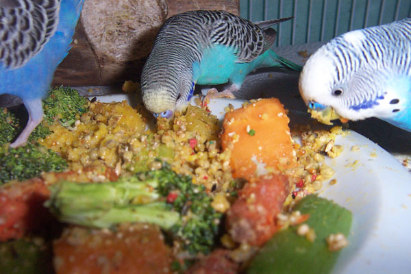 Budgie Breakfast Recipes